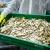 Covid-19: Drugi krug kompenzacija za akvakulturu i preradu