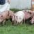 Lažirao organski uzgoj stoke i zaradio 900.000 evra više
