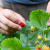 Organsko voće i povrće iz Srbije na evropskom tržištu