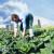 Austrija ima preko 23% površina pod ekološkom proizvodnjom