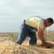 Ratari se nadaju ceni suncokreta i soje za najmanje 40 do 45 dinara po kilogramu