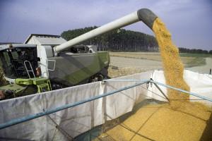 Svetske cene hrane rastu, uz slabe izglede za proizvodnju kukuruza