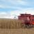 Ratari nezadovoljni otkupnom cenom kukuruza
