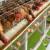 Bespovratna sredstva za farme u Vojvodini