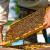 Objavljen Javni natječaj za pojekte istraživanja u pčelarstvu