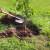 Uprava za šume poklanja sadnice onima koji žele da pošume svoje imanje