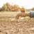 Planet Zemlja neće imati dovoljno pitke vode do 2040. godine?