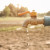 Planeta Zemlja neće imati dovoljno pijaće vode do 2040. godine