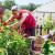 Sezonsko cvijeće i aromatično bilje – pravilna sjetva i značaj