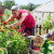Sezonsko cveće i aromatično bilje - pravilna setva i značaj