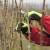 Tradicionalni načini rezidbe vinograda i formiranje uzgojnih oblika