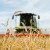 Nedostatak padavina: Globalna proizvodnja pšenice bit će nešto manja od prošlogodišnje