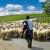 """Uzimaju milione evra subvencija za pašnjake na kojima """"pasu"""" virtuelne ovce?"""