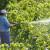 Istekla vam je iskaznica za pesticide? Evo kako ju produžiti