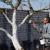 Oblačno i suvo vreme - okrečite stabla i zaštite od patogena