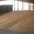 Ratari nisu zadovoljni cenom pšenice, ali ne odustaju od setve