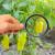 Usvojena Rezolucija o strožem ispitivanju i odobravanju pesticida!