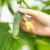 Zabrana uvoza traje: U krastavcu nađen povećan sadržaj pesticida