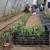Mladim poljoprivrednicima blizu šest miliona dinara