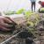 Profesorka ruskog u potrazi za najjednostavnijim načinom proizvodnje povrća