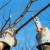 Kako pravilno obaviti zimsku rezidbu breskve i nektarine?