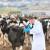 U EU na snagu stupio novi zakon o zdravlju životinja