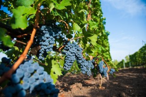Najskuplje vino na svetu pije se iz kristalnih kašičica