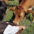 Poticaji: Za proizvođače mlijeka izdvojeno 500 KM/mjesečno