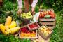 Poljoprivrednici doprinose smanjenju bacanja hrane