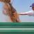 Rast cene pšenice, kukuriza i soje na Produktnoj berzi