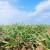 Prihrana ozimih kultura - važna agrotehnička mjera