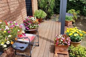 Što uzgajati na južnoj strani balkona ili terase?