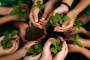 Kako različite biljke funkcioniraju - zajedno?