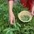 7 ljekovitih biljaka: Djelotvorne za organizam, a lako se uzgajaju