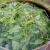 Voćke i povrtnice ojačajte te zaštitite od štetnika koprivom, gavezom i preslicom