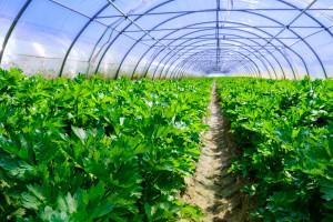 Za Mjeru 10.1.15 koristite odlična Grena gnojiva
