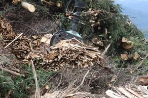 Biomasa - šansa za opstanak na selu