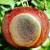 Simptomi i suzbijanje gorke truleži jabuke