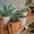 Regulacija vlage za sobno bilje
