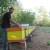Kada bi i komšijske livade bile zasejane facelijom - izvrsnom za pčele