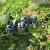 Da li su skupi poljoprivredni proizvodi na našim pijacama, prve borovnice i 10 KM?