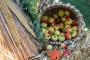 Poljoprivrednom strategijom do radnih mjesta