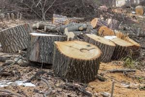 Hrastovi meta šumskih kradljivaca, policija uputila apel vlasnicima