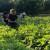 OPG Ojdanić: U ovim stresnim vremenima, poljoprivreda je najbolji