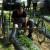 Jagoda kao izvor sigurnih prihoda