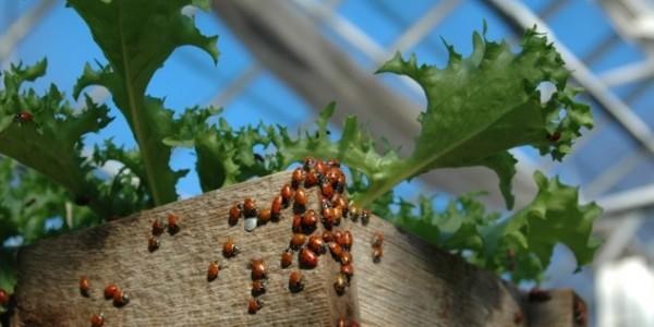 poljoprivrednici koji pronalaze mjesto Kanada