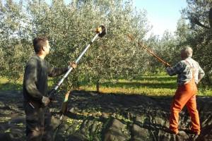 OPG Bulić: Ako se želite baviti poljoprivredom morate to raditi sa zadovoljstvom, ako ne, bolje se ni ne upuštati