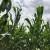 Primarni poljoprivredni proizvođači, očitujte se ili ostajete bez potpore