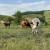 Uništimo li stočarstvo, rušimo čitavo poljodjelstvo