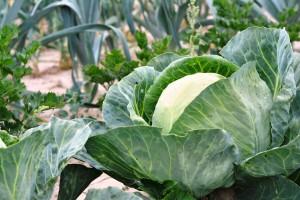 Savjeti kako uspješno proizvoditi povrće
